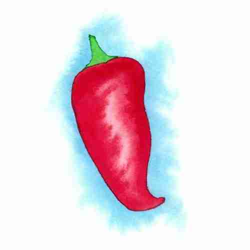 watercolour red hot chilli