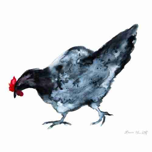 Andalusian Blue Chicken watercolour