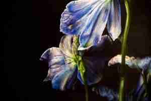 Jessica Shepherd botanical art